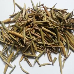 Feuilles d 39 olivier zaatarzaatar for Plante zaatar
